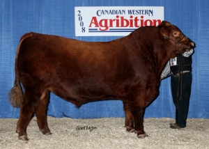 Red JCC Equity 5s foundation herd sires