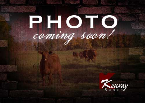 Kenray Ranch photo coming soon
