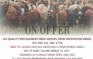 beyond-borders-bred-heifer-sale-2016