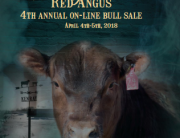 kenray bull sale catalogue cover 2018
