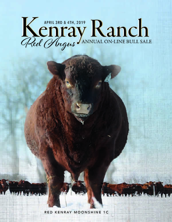 Kenray Ranch 2019 On line Bull Sale