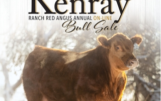 Kenray Ranch Angus Bull Sale Cover 2020