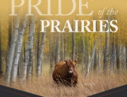 Pride of the Prairies Fall Female Angus Sale 2020