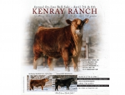 Kenray Ranch 2021 Angus Bull Sale