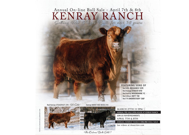 Kenray Ranch 2021 Angus Bull Sale