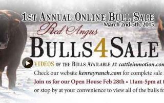 Kenray Angus Bull Sale 2015